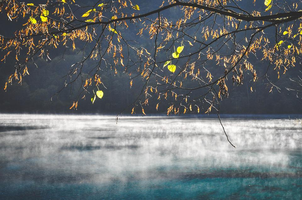 Water, Lake, River, Steam, Cold, Branches, Leaves, Tree