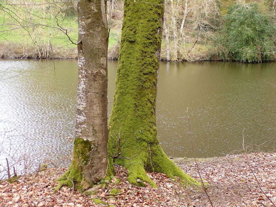 Body Of Water, Nature, Tree, River, Wood, Landscape