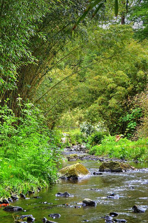 River, Vegetation, Nature, Wood, Forest, Plants, Tree