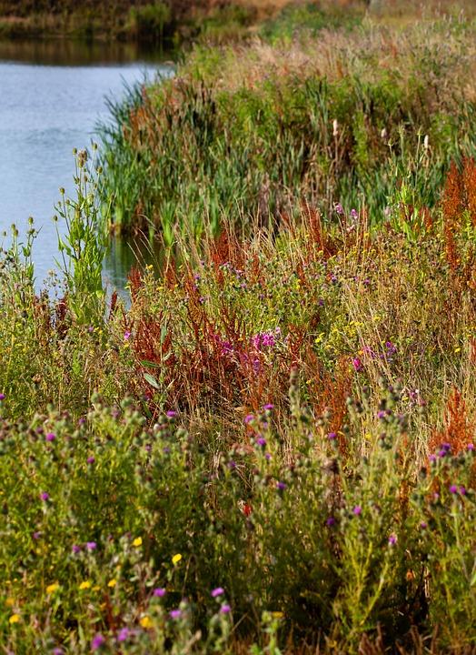 Riverbank, Wild Flower, English Flowers