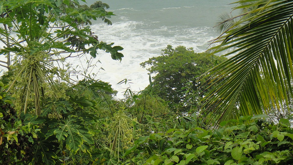 Greenery, Flora, Nature, Rivers, Water, Flowing, Plants