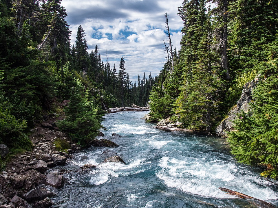 Rivers, Streams, Flowing, Blue, Water, Wild, Forests