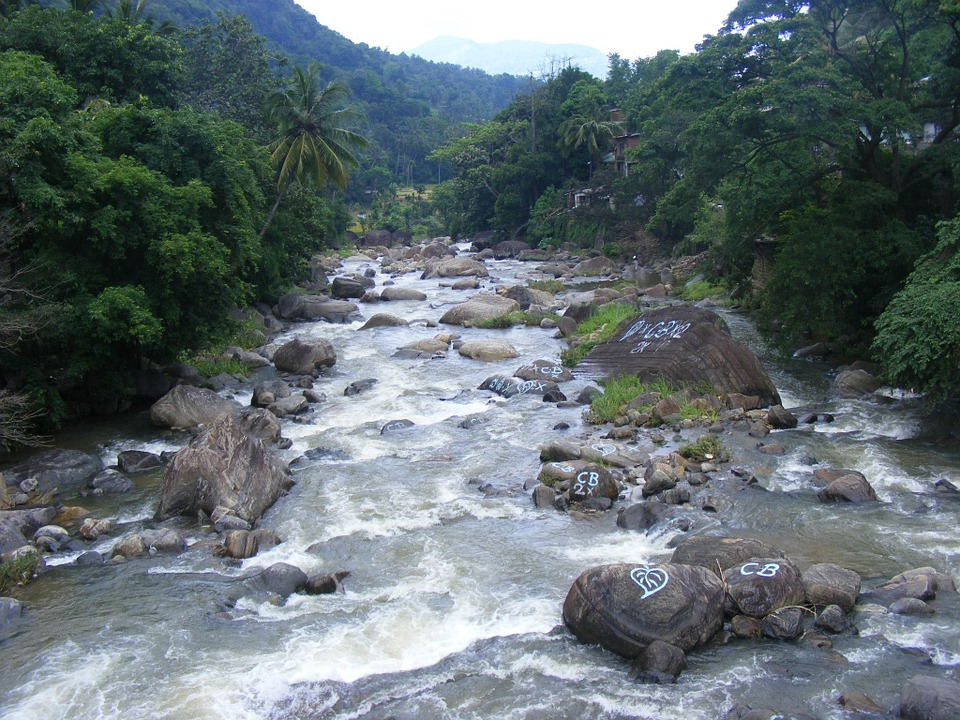 Rivers, Water, Flowing, Flora, Trees, Greenery, Plants