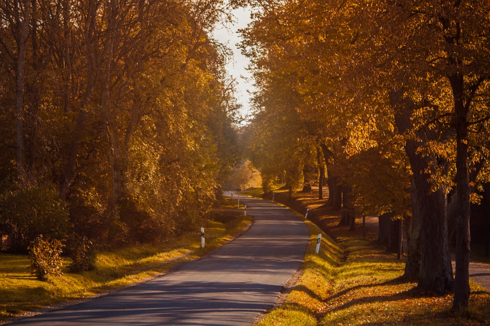 Autumn, Road, Trees, Landscape, Nature, Yellow, The Way