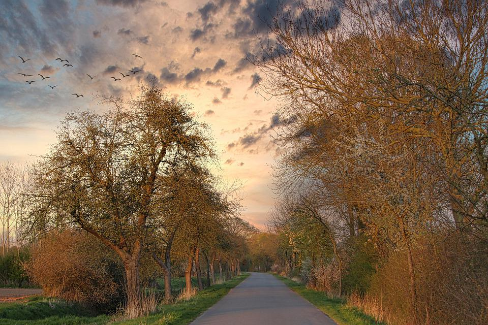 Road, Trees, Away, Clouds, Avenue, Spring, Mood