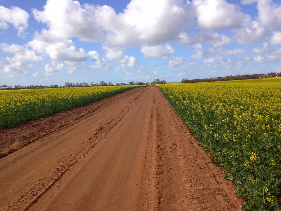 Road, Country, Canola, Rural, Agricultural, Farming