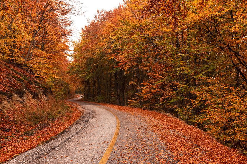 Fall, Autumn, Fantasy, Forest, Road, Greece, Kastoria