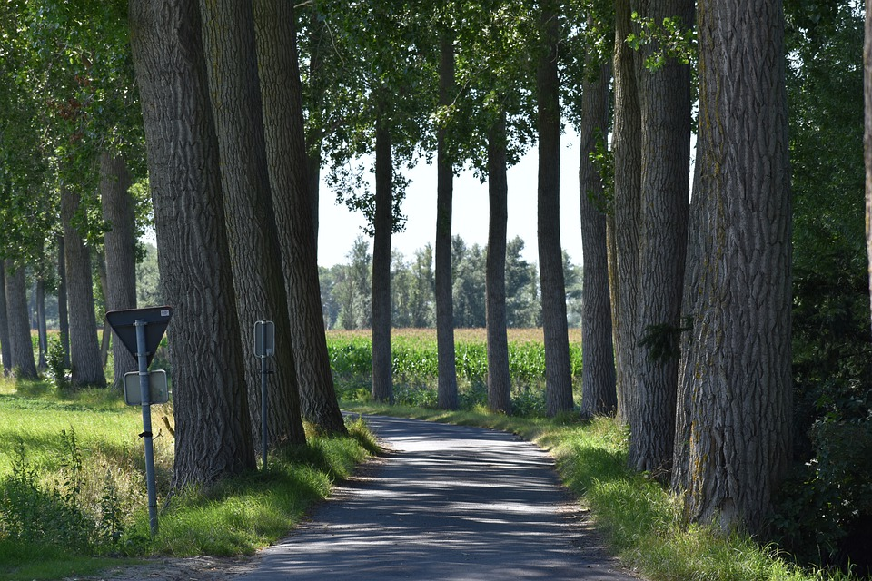Road, Path, Trees, Leaves, Foliage, Park, Signs, Nature