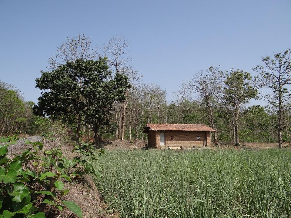 Farm Hut, Highway, Road, Forests, Teak, Sugarcane