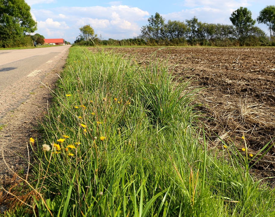 Road, Country, Go, Grass, Weeds, Roads