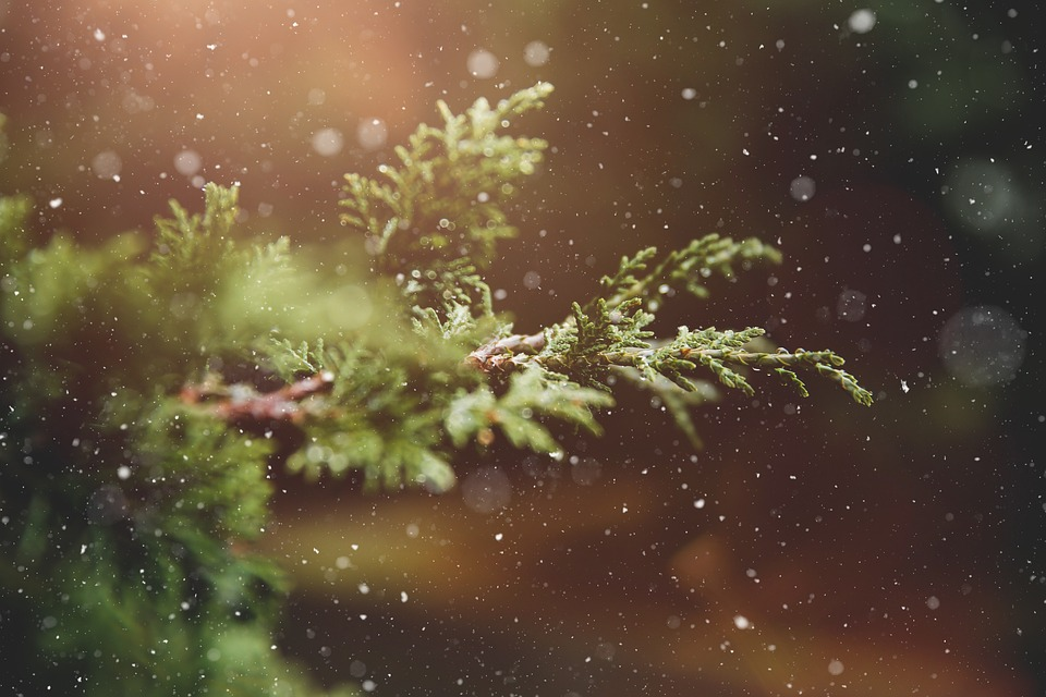 Winter, Plant, Road, Tree, Green, Nature, Snowflakes