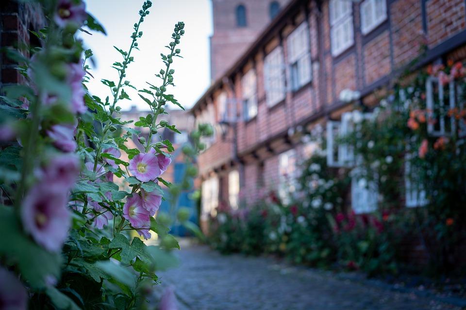 Lüneburg, Houses, Flowers, Stock Rose, Road, Away, City