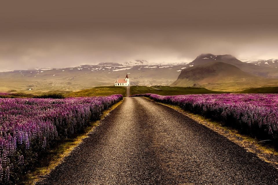 Iceland, Flowers, Landscape, Road, Sunrise, Sunset