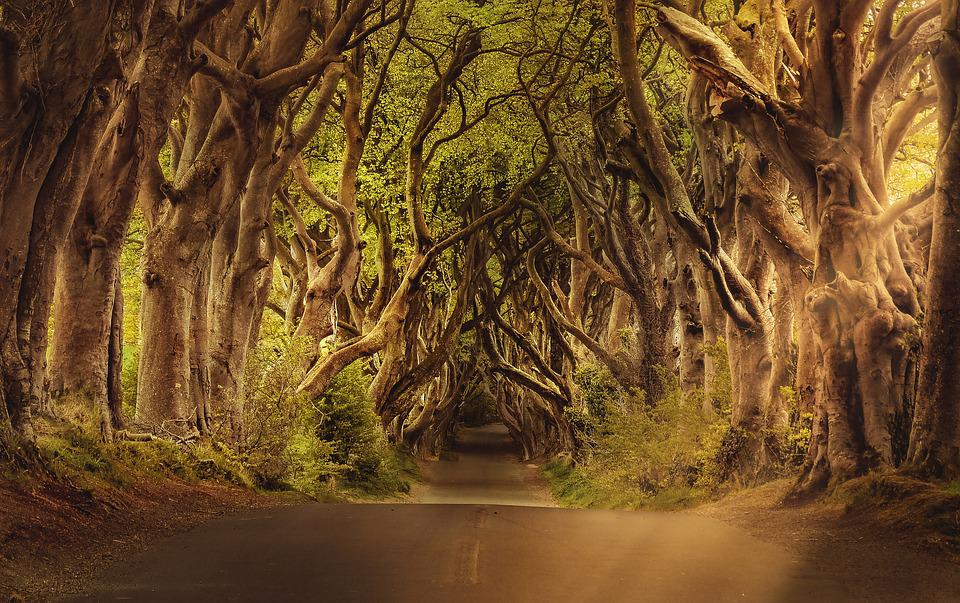 Trees, Avenue, Road, The Dark Hedges, Landscape