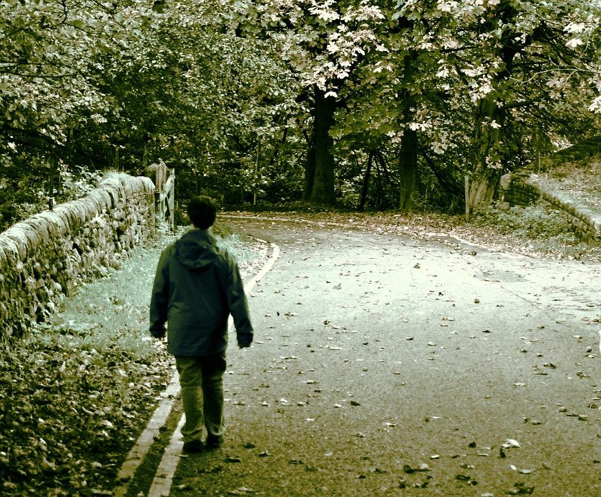 Man, Walking, Road, Littered, Leaves, Forest, Stroll