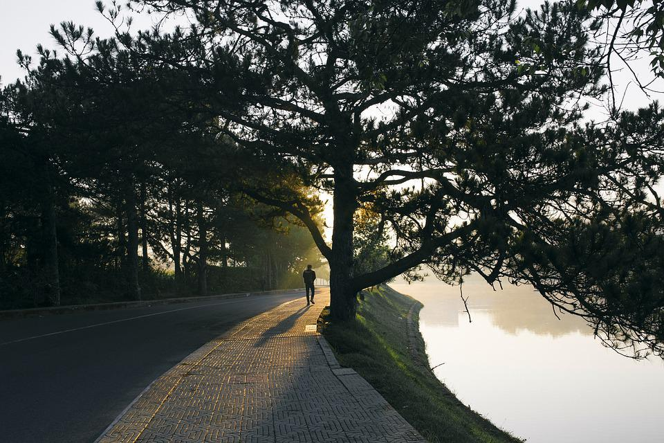 Tree, Nature, Road, Vietnam, Asia, Light, Forest