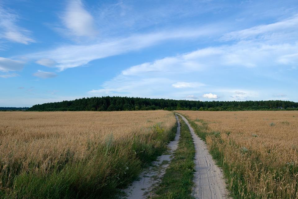 Field, Road, Forest, Nature, Sky, Summer, Landscape