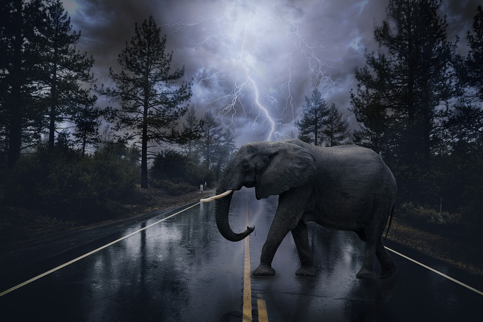 Elephant, Road, Trees, Thunderstorm, Nature