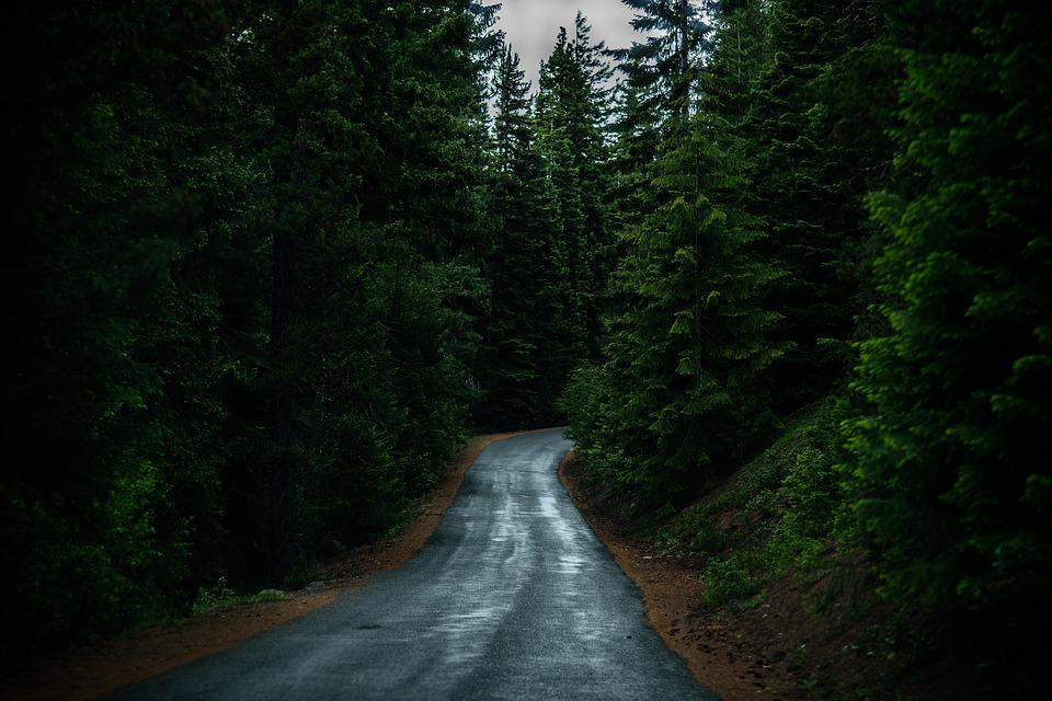 Conifer, Evergreen, Forest, Landscape, Outdoors, Road