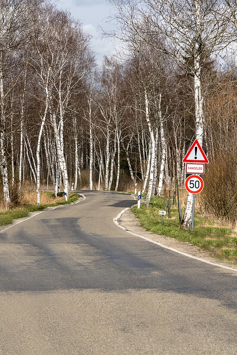 Road, Path, Away, Tarnsport, Forest, Avenue, Birch