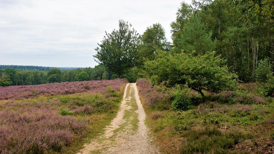 Heideveld, Path, Trees, Cloudy, Hiking, Landscape, Road