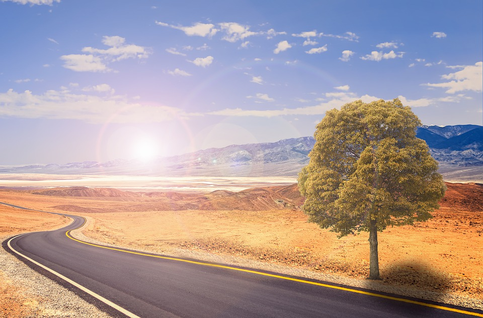 Road, Tree, Nature, Forest, Landscape, Path, Outdoors
