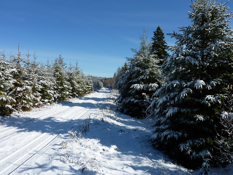 Winter, Landscape, Pine Trees, Snow, Road, Forest, Cold