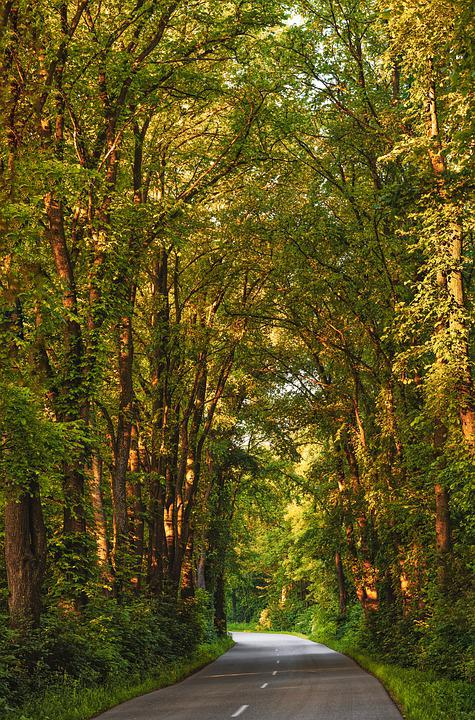 Road Trip, Avenue, Canopy, Road, Forest, Sunrise, Crown