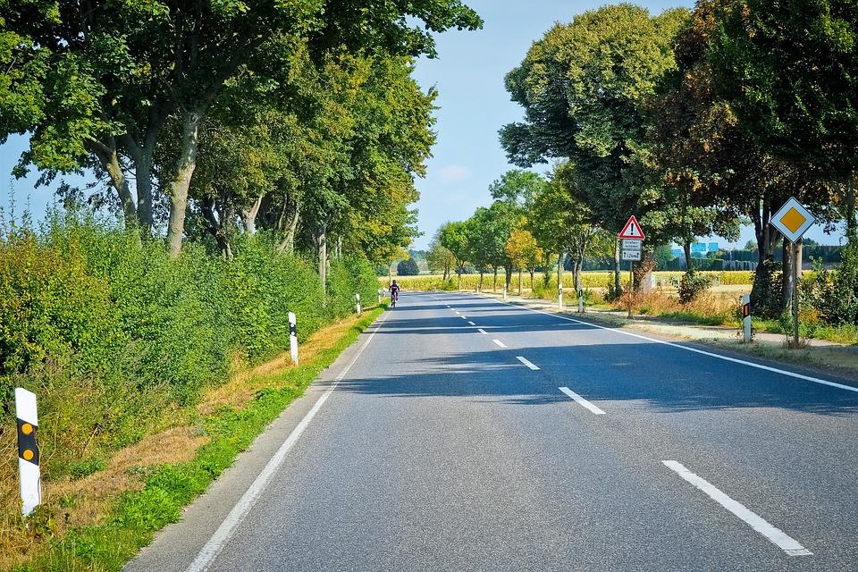 Road, Tree Lined Avenue, Avenue, Nature, Trees