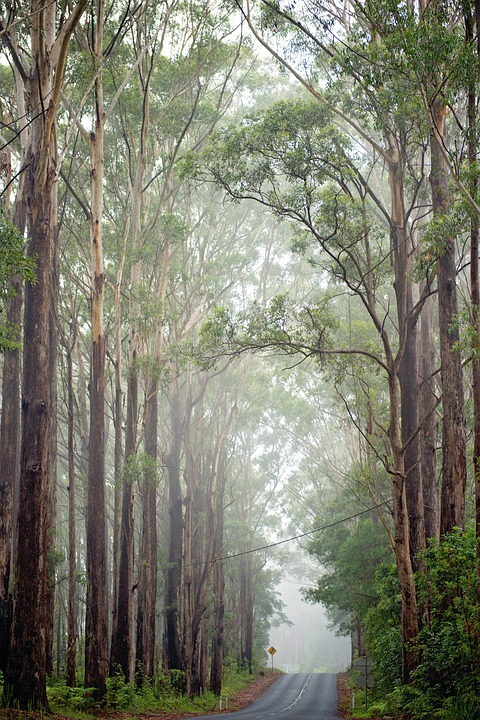 Australia, Road, Mist, Trees, Landscape, Nature, Fog