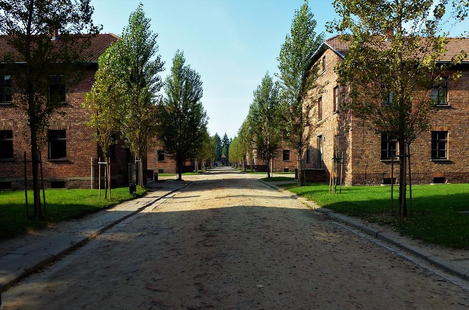 Tree, Architecture, Outdoor, Roadway, Street, Poland