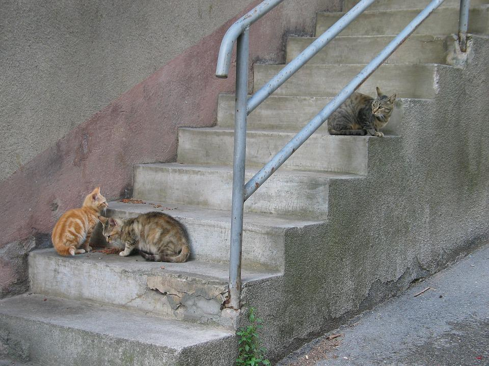 Cat, Kitten, Pet, Mammal, Roam, Stray Cat, Trap, Food
