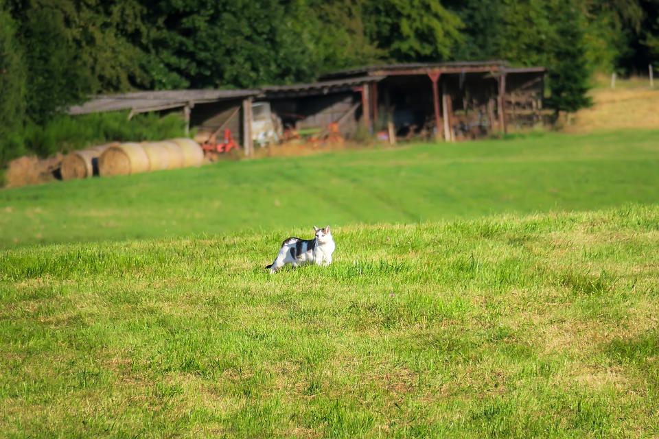 Cat, Meadow, Scale, Stray, Roam, Sneak, Look, Watch