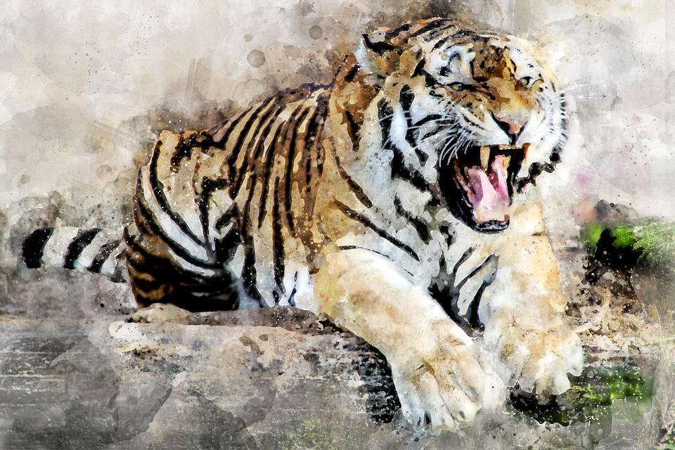 Tiger, Predator, Animal, Tooth, Roar, Dangerous