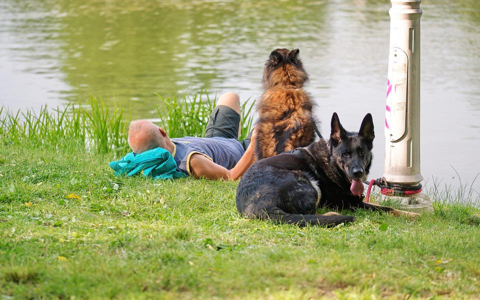 Dogs, Pets, Animals, The Dog, Rob, Black, Brown, Man