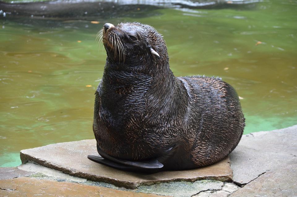 Robbe, Zoo, Animal World, Seal, Mammal, Nature
