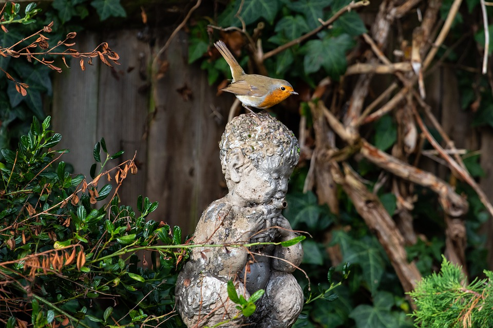 Robin Redbreast Perched On Statue, Robin