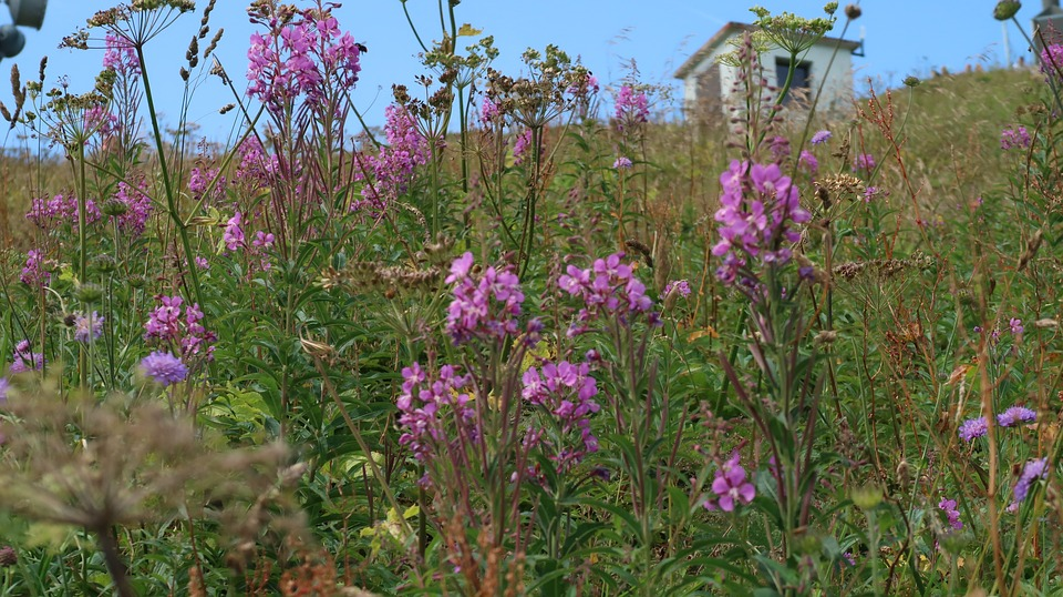 Flowers, Suisse, Rochers-de-naye