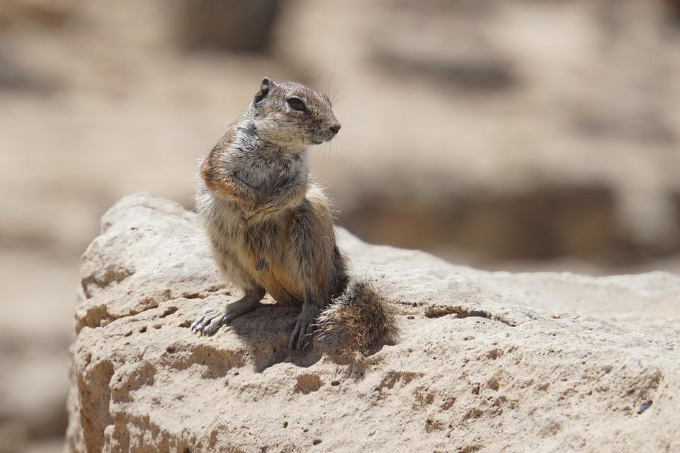 Chipmunk, Rock, Nature, Rodent, Wild, Animal World