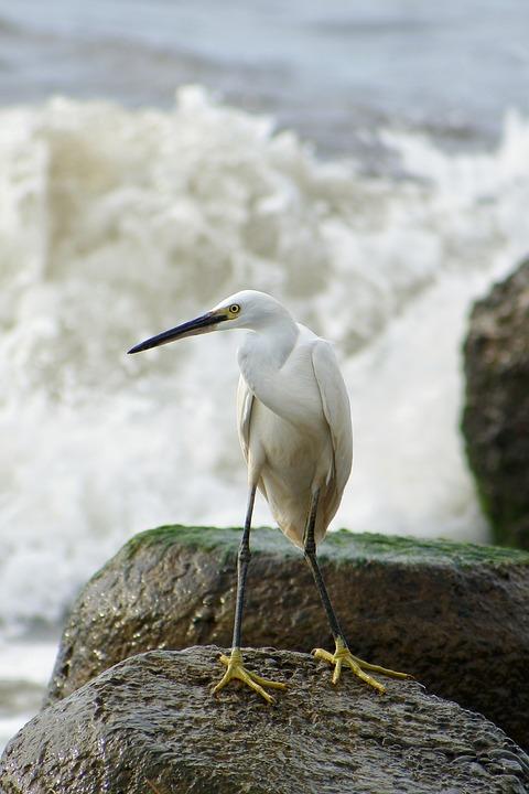 Animal, Sea, River, Estuary, Rock, Wave, Beach