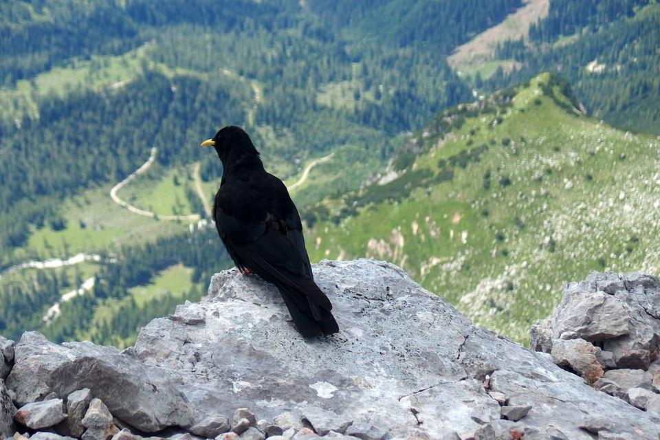 Bird, Black, Mountains, Rock, Rocks, On The Edge