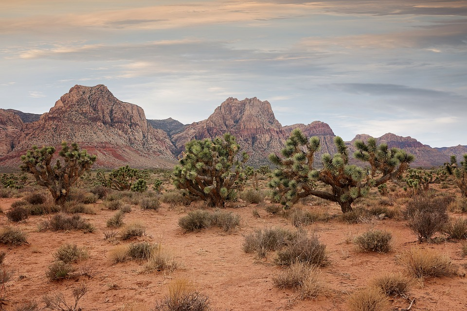 Bonnie Springs Ranch, Rock, Geology, Nature, Outdoors