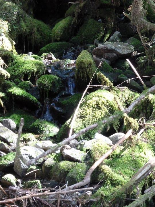 Brook, Moss, Rock, Nature, Water
