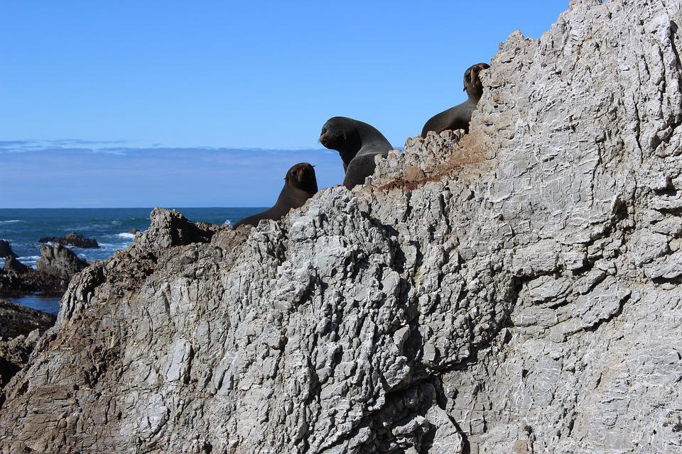 Crawl, Rock, Sea, Coast, Animal, Nature, Freedom