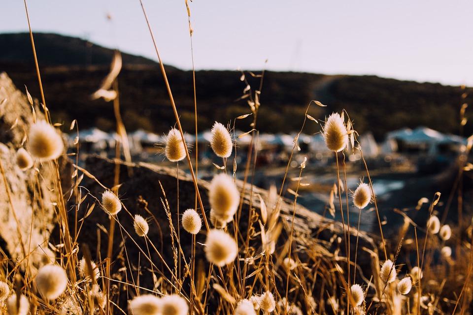Grass, Outdoor, Blur, Coast, Rock, Mountain, Nature