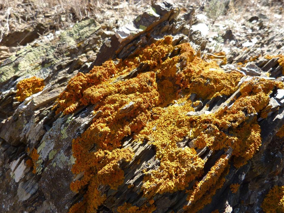 Rock, Lichens, Orange, Texture, Moss
