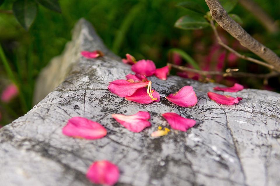 Flower, Red, Petal, Rock