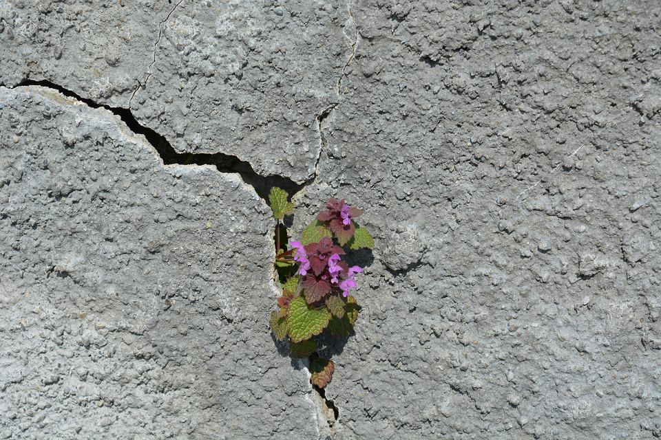 Stone, Nature, Plant, Flower, Rock, Green