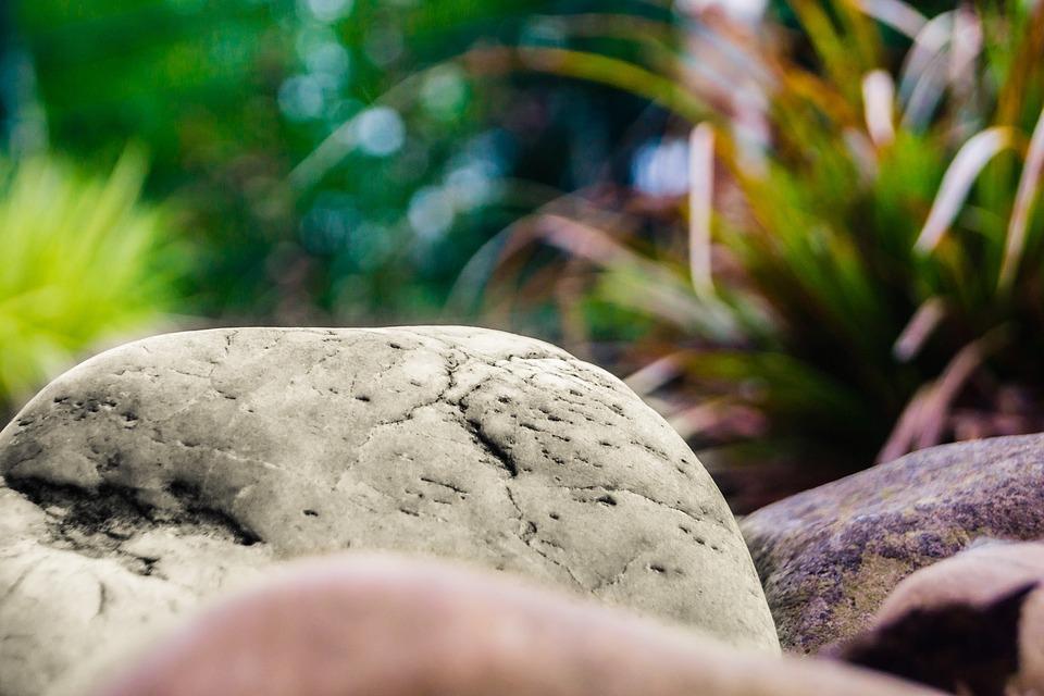 Stone, Pebble, Sand Stone, Rock, Plant, Stones