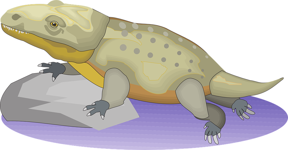 Water, Rock, Reptile, Ancient, Crocodile